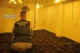 Gibraleón | La Guardia Civil desmantela una importante plantación de marihuana en la localidad