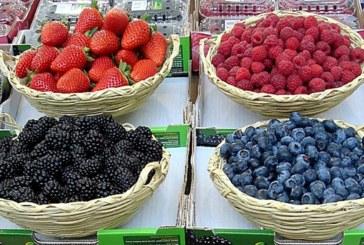 De Buena Mañana | La cooperativa de Cartaya exporta más de 10 millones de kilos de frutos