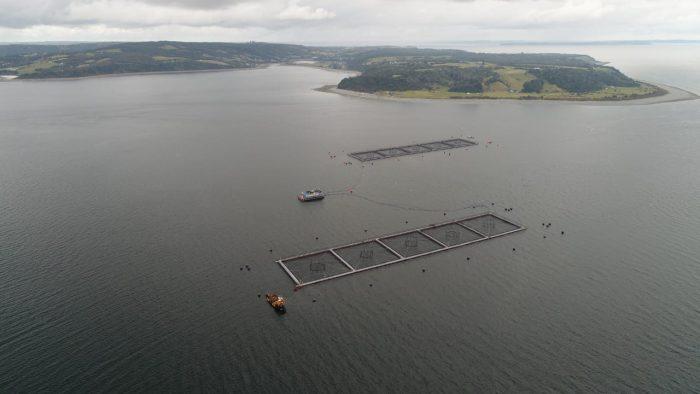 Regional: empresa se refiere a masivo escape de salmones desde centro de cultivo.