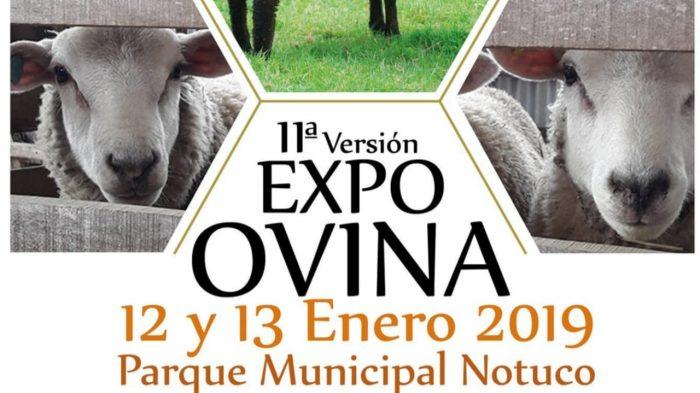 Chonchi: se inauguró Expo Ovina 2019.