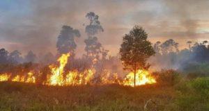 Regional: decretan suspension total de todo tipo de quemas controladas.