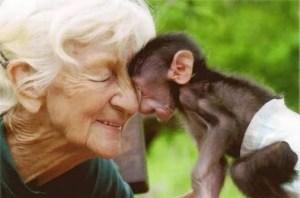 macaco amor-2