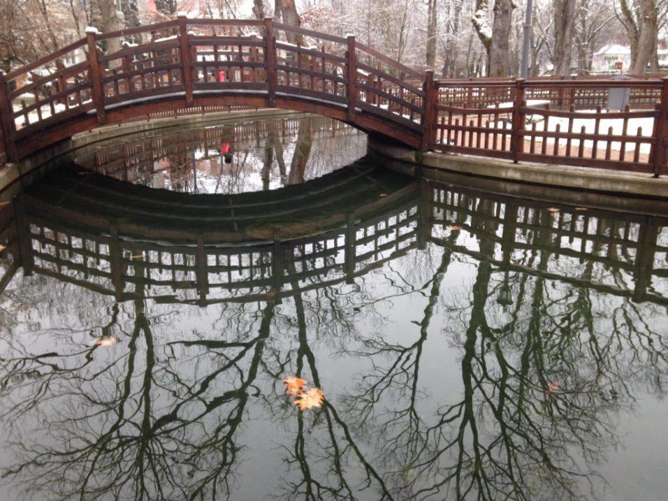 lacul municipal bistrita (3)