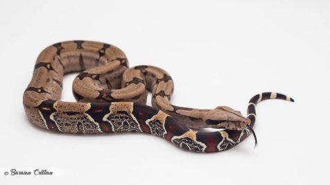 Reptile 2