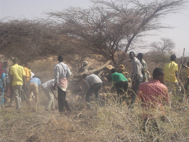 Surge in charcoal production raises concern in drought-torn Gedo region of southern Somalia
