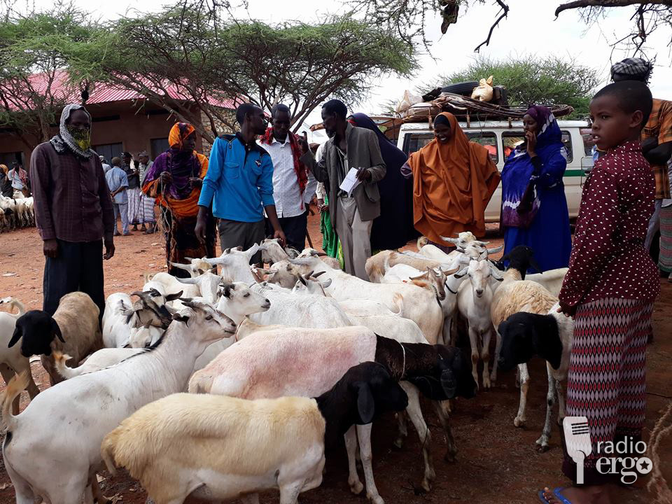 Herders in Galgudud restock their animals with hopes of reviving their livelihoods