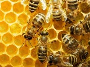 Ανακοίνωση για τη ζημία σε μελισσοτρόφους σε Φέρρες και Πέπλο - μέλισσα , κυψέλη