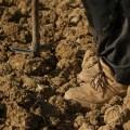 αγρότης χωράφι