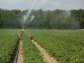 χωράφι πατάτες πότισμα