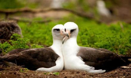 Sesso: 10 curiosità sul mondo animale e sui loro comportamenti sessuali