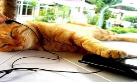 Musica per gatti: esiste davvero ed è studiata per rilassare i nostri mici