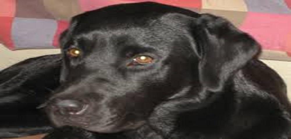 Università di veterinaria assume due cani per valutare ammissioni degli studenti