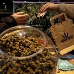 La cannabis a tavola. Da biscotti all'olio: è boom