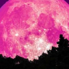 Luna fragola, oggi lo spettacolo è nel cielo