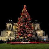 """Roma, questa notte si monta """"Spelacchio"""" l'albero di Natale famoso nel mondo"""
