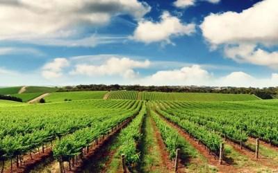 Zimbabwe to Return Seized Land to Farmers