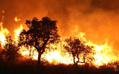 Two Killed in Algeria Wildfires