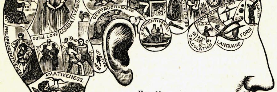 Modello per lo studio del cranio secondo i principi della frenologia