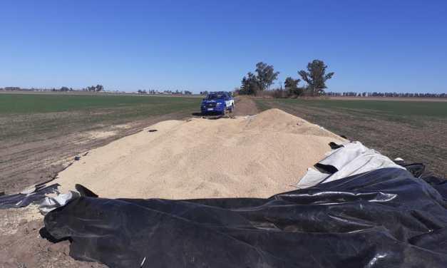 Robaron 20.000 kilosde soja en un campo