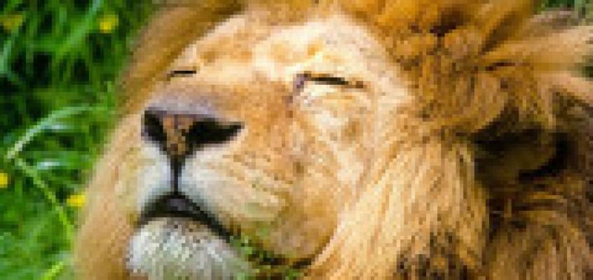 Un mercoledi da leoni