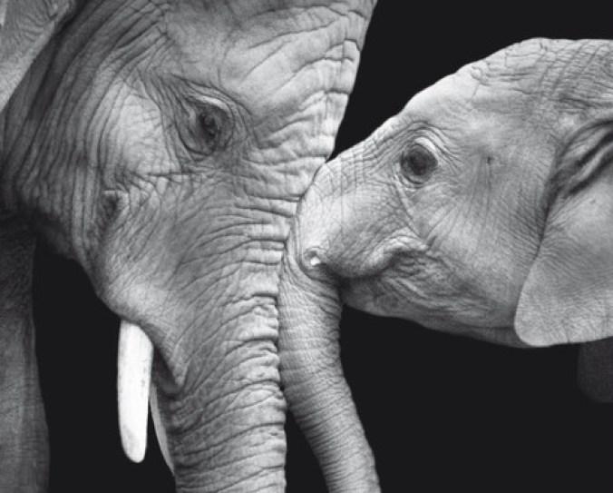 ¿En qué piensan los animales? - En-que-piensan-los-animales_image_380-300x241
