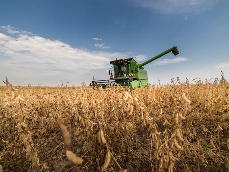 Cerca de 60% das lavouras de soja na área da Coopatrigo já foram colhidas