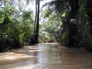 Ekoli Creek