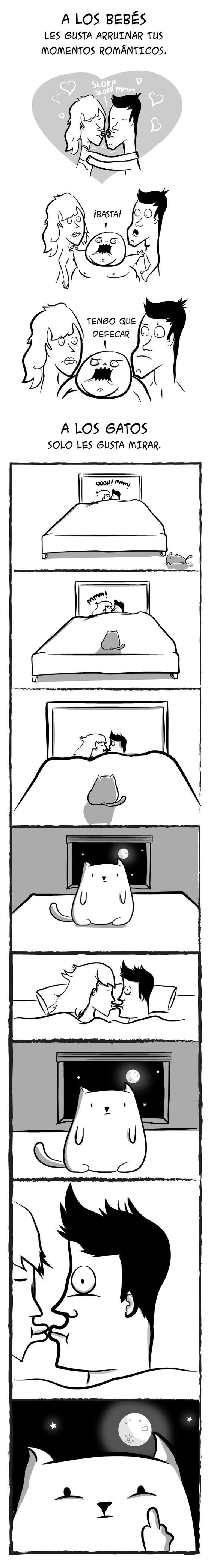 bebes-vs-gatos-05