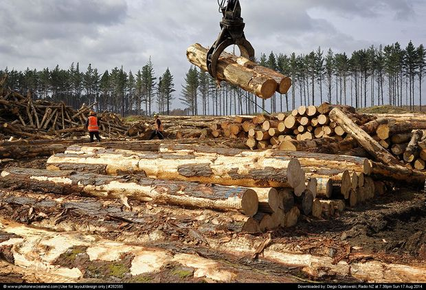 Small forestry contractors leaving industry  Radio New