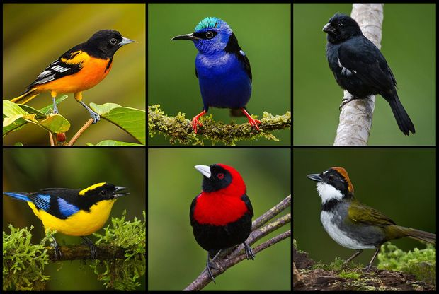 Image result for birds different colors