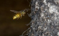 Critter of The Week: the scale insect | Jesse Mulligan, 1 ...