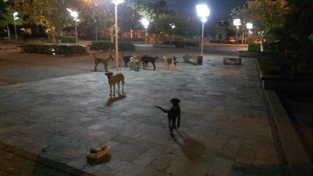 https://i0.wp.com/www.radiopajeu.com.br/portal/wp-content/uploads/2015/03/cachorros1.jpg?resize=611%2C344