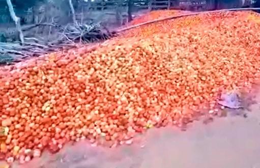 Em vídeo produtor de tomate pernambucano diz que imposto torna atividade inviável