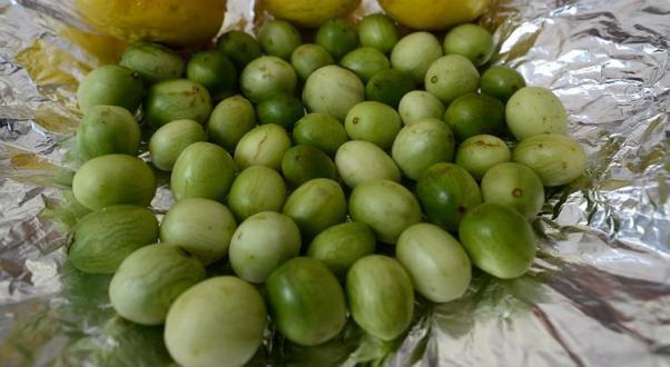 Umbu pernambucano será exportado para a Europa