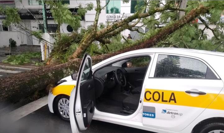 50 árvores correm risco de cair em São José, diz Prefeitura