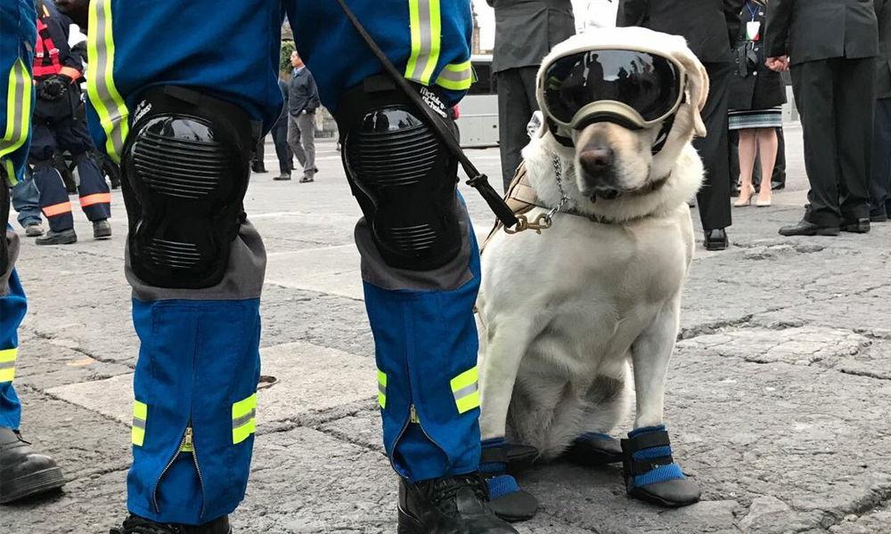 Frida, la perrita rescatista que se robó el corazón de México