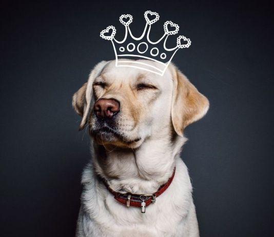 Seguros para perros