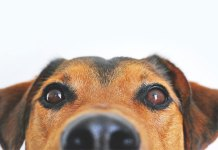 ¿Cómo dar una pastilla a tu perro? Conoce nuestros tips.