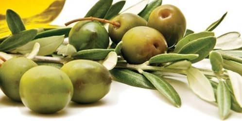 Ijuí quer incentivar o cultivo da oliveira – RPI - Rádio Progresso de Ijuí
