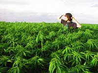 A man in a field of marijuana plants Courtesy of: sfgate.com