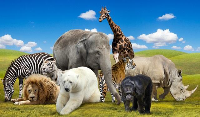 El mundo animal en el refrán judeoespañol, desde el CIDICSEF de Buenos Aires