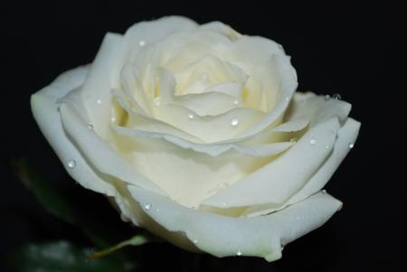 La purezza: la gioia più bella