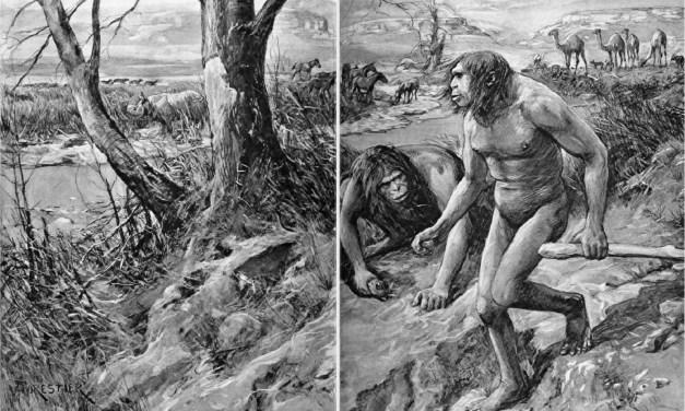 [VIDEO] Demolizione del darwinismo. Tre documentari. (II) Gli errori dell'evoluzionismo