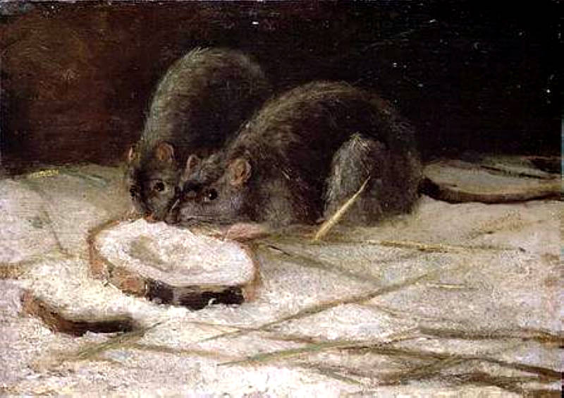 CH100768 Two Rats, c.1884 (oil on panel) by Gogh, Vincent van (1853-90) oil on panel 29.1x41.3 Private Collection © Christie's Images Dutch, out of copyright