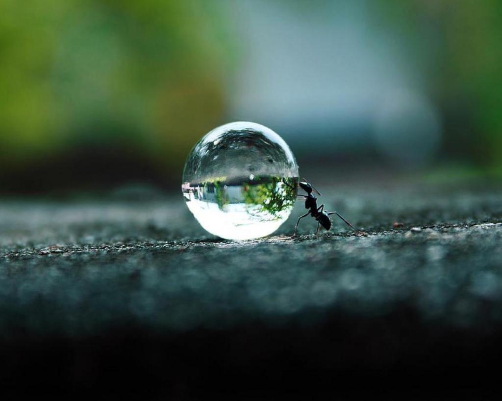 Sugar_Salt_ants