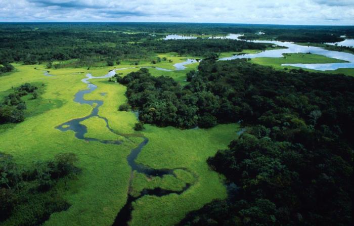 """Tutto il peggio di """"Querida Amazonia"""""""