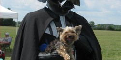 Join-the-dark-side-puppies-23749795859