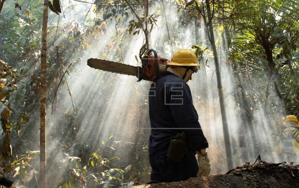 Brasil: deforestación en la Amazonía crece un 54% en los últimos 10 meses
