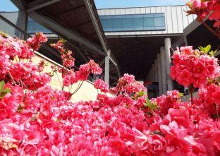 flori la mall (5)