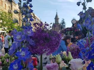 Timfloralis Piata Victoriei 2018 (1)